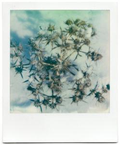 Polaroids Paula 4